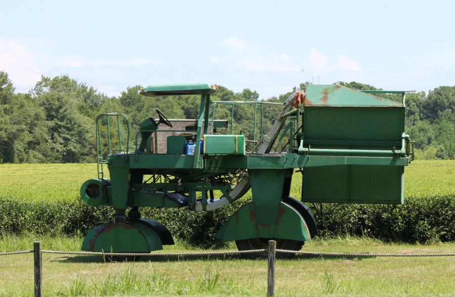 Charleston Tea Plantation Tea Harvester